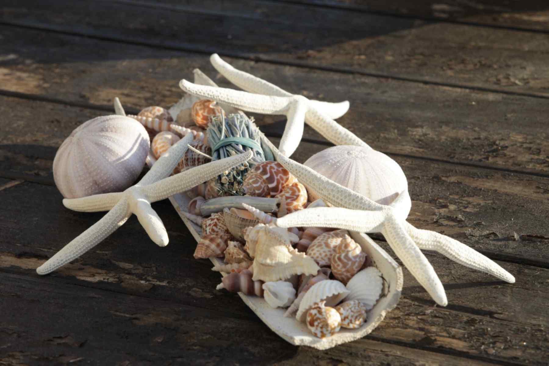 galiano conch